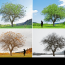 Detecting the Different Seasons