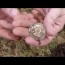 Hunting for silver with the Minelab CTX3030