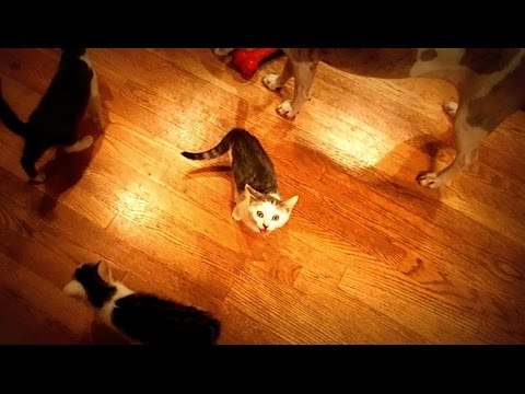 Kittens and Puppies Snack Time