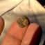 100 FINDS IN 100 DAYS: #18 Stunning Early 1800s Button