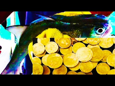 TREASURE & FISHING VACATIONS (Fishing/Gold/Coin Shooting, Cairns: Read Description)