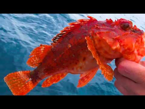 FISHING ADVENTURES (The Sunshine Coast Queensland Australia: Read Description)