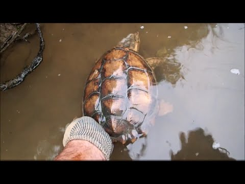Metal Detecting & Magnet Fishing: Nokia Phone, Snapping Turtle, Shopping Carts And Trash.