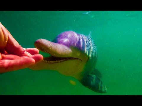 FIRST CONTACT WITH WILD DOLPHINS (Contact with people)