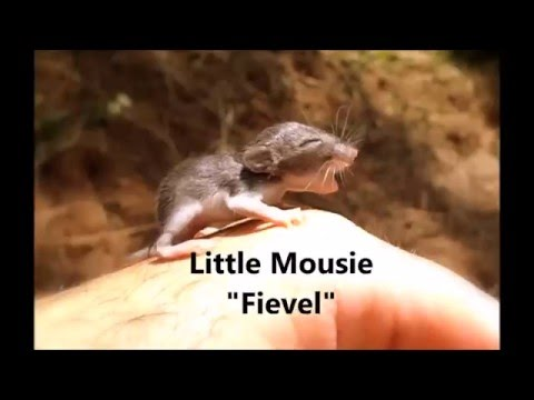 Second Chance For A Baby Mouse