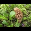 Morel Mushroom And Nature Walk