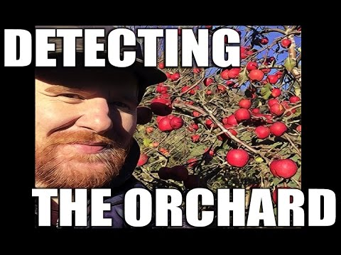 Detecting a (Medieval?) Orchard!:  Metal detecting UK # 107