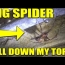 BIG Spider fell down my top when exploring – Urban Exploration