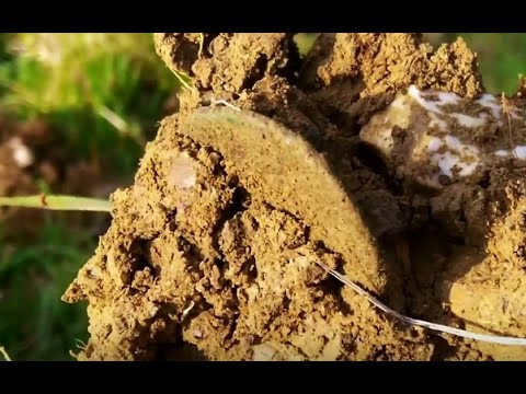 What's in the clod!?  Metal Detecting UK # 115