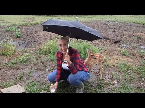Dixie the Deer & my Farm Animals During a Hurricane