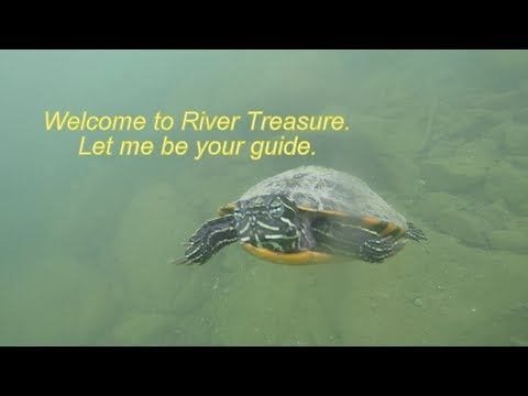 River Treasure: Mega Turtle Edition