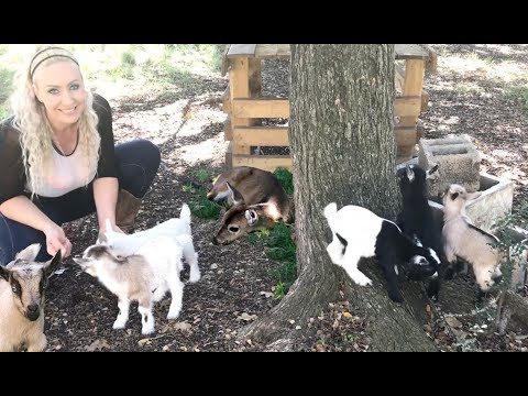 Cuteness Overload with my new Baby Goats!