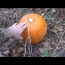 Metal Detecting Adventure: The Great Pumpkin Settlement Hunt