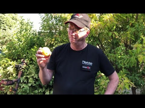 Lemons For Leukemia Eating Challenge