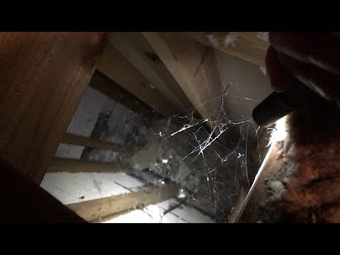 Exploring Inside The Attic – What Will We Discover?
