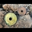 Metal Detecting Internment Camp Lost Coins And Relics