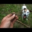 Metal Detecting With Otis The Dog!