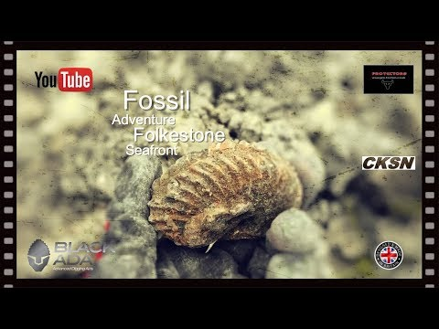 🇬🇧 FOSSIL HUNT ADVENTURE ON FOLKESTONE FORESHORE No:271…