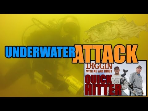 QH38: Dive detecting fish attack – DWKGR Quick Hitter