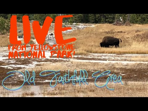 Live on the road! Live from Old Faithful in YNP