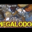MEGALODON Found Shark Tooth Hunting at Calvert Cliffs Maryland