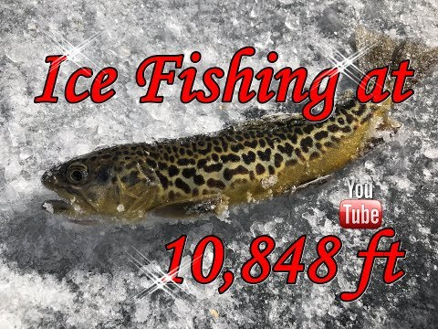 *EPIC* Non-stop ICE FISHING action!* #5280adventures #icefishing