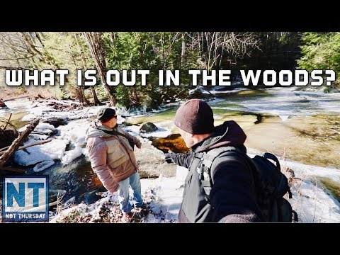 Whats in the woods ? Following the old walls roads & Trails – Not Thursday #119 Hiking & exploring