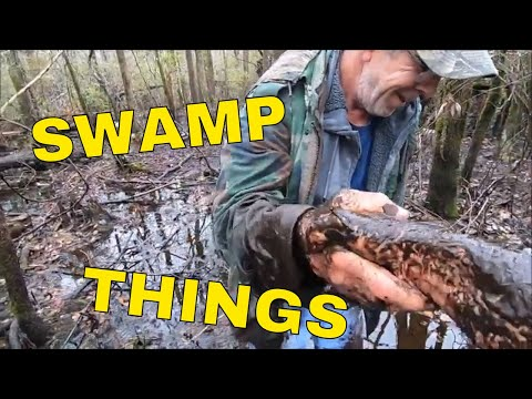 Swamp Things