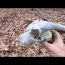 The Devil Skull Metal Detecting Adventure