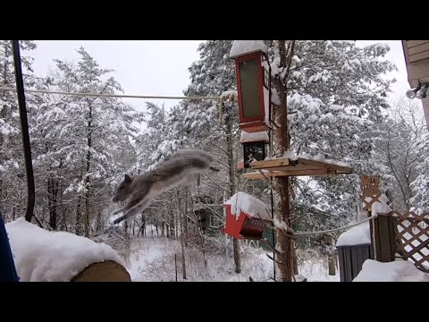 Birds and Beasts At My Bird and Beast Feeders