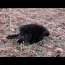 Encountered Porcupine While Metal Detecting | Nugget Noggin