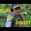 Metal Detecting Fields And Forests!