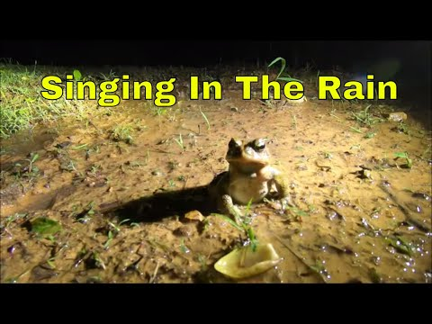 Singing In The Rain: Froggy Style