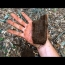 Metal Detecting for Civil War Relics – Found Exploded Artillery Shell Fragments!