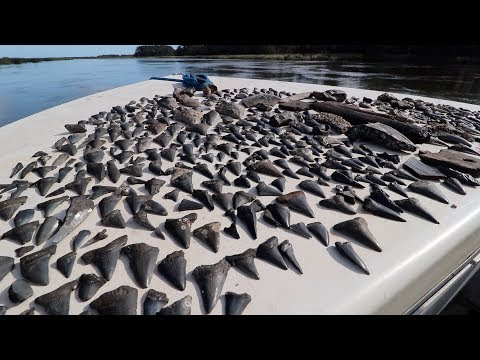Found Huge Megalodon Shark Teeth While Diving The Cooper River!
