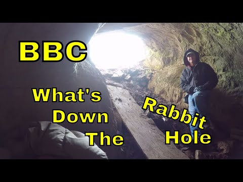 BBC : What's Down The Rabbit Hole?