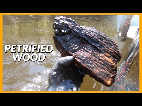 Found Huge Chunks Of Petrified WOOD In The River!