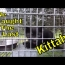 Kitten Rescue: Dr. Lindsay Catches The Last Lonely Kitten : Family Reunited!